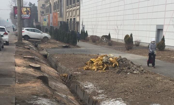 Более десятка деревьев вырубили в центре Алматы: власти ведут расследование