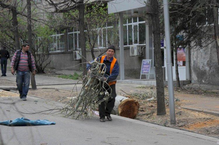 В Алматы началось досудебное расследование по факту незаконной вырубки деревьев