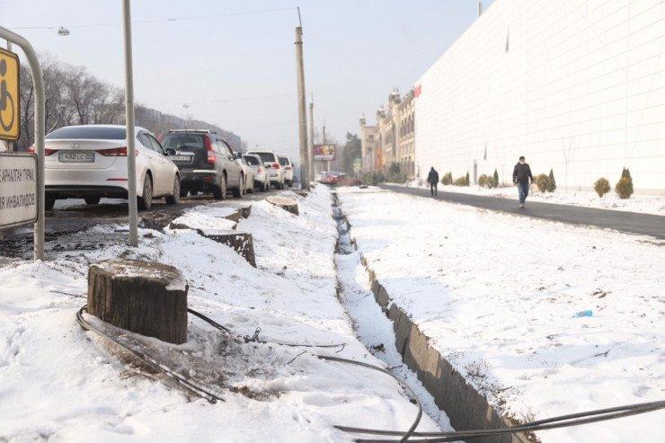 В управлении зеленой экономики высказались о спиленных деревьях в Алматы