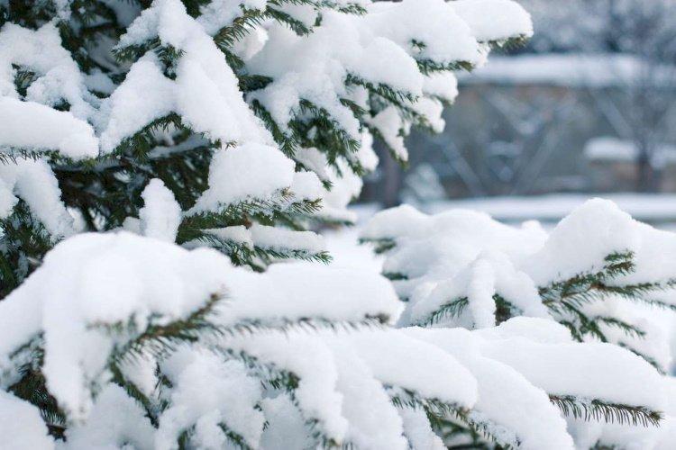 О погоде в первые дни зимы рассказали синоптики