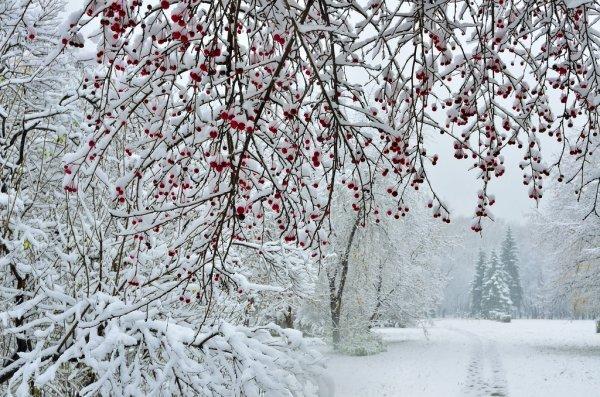 Погода без осадков ожидается в Алматы 2 декабря