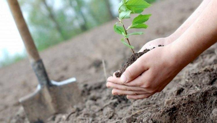 30-кратную компенсацию за вырубку краснокнижных деревьев хотят ввести в Казахстане