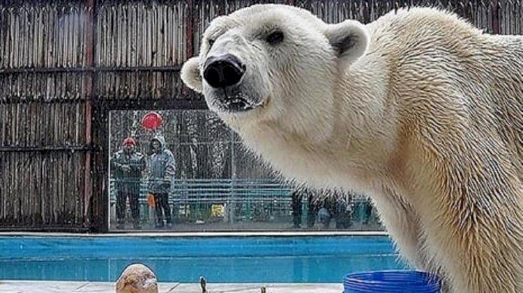 В зоопарке Алматы усыпили белого медведя
