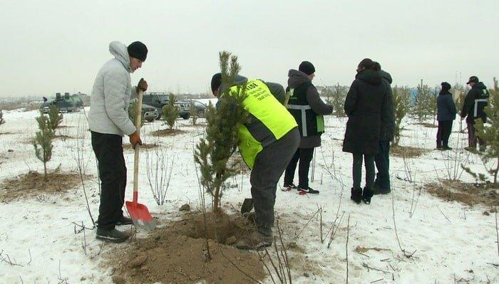 Алматинские экоактивисты отметили День Независимости посадкой деревьев