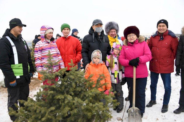 Jasyl Almaty: 380 тысяч деревьев высадят в Алматы в следующем году
