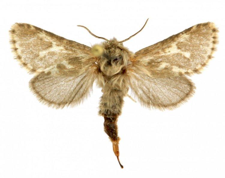В Алтае и Казахстане нашли новый вид бабочек