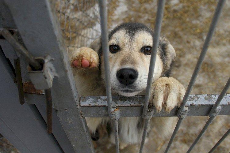 Проблему жестокого обращения с животными обсудили в Алматы