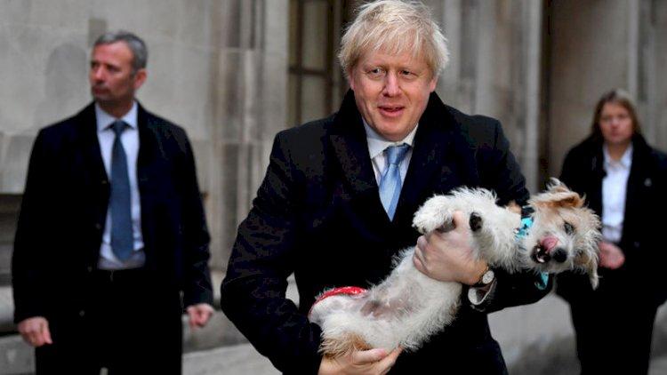 Из-за коронавируса в Великобритании участились случаи похищения собак
