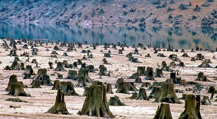 Президент подписал новый Экологический кодекс: теперь «загрязнитель платит»