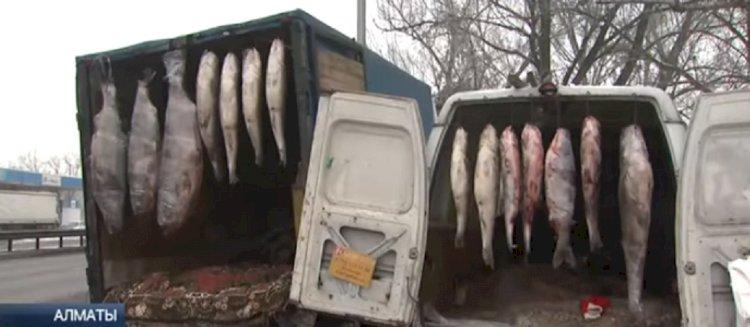 Гигантскую рыбу-мутанта продавали уличные торговцы в Алматы