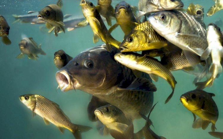 Комитет рыбного хозяйства создали в Казахстане