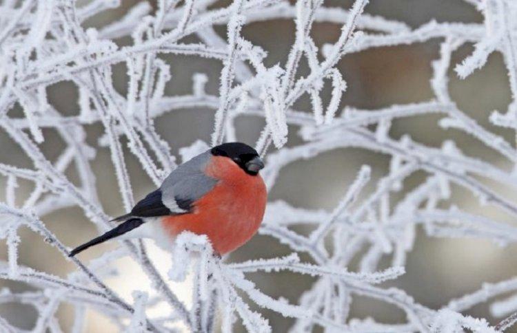 Морозы вновь вернутся в Казахстан