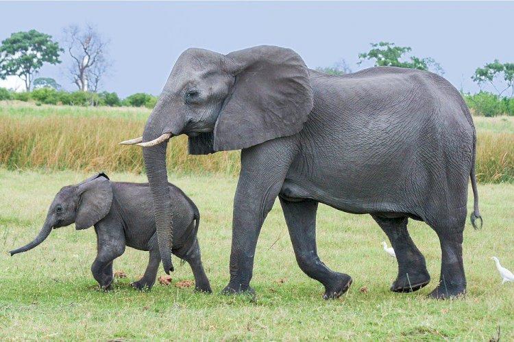 Ученые подсчитали африканских слонов с использованием спутниковых снимков