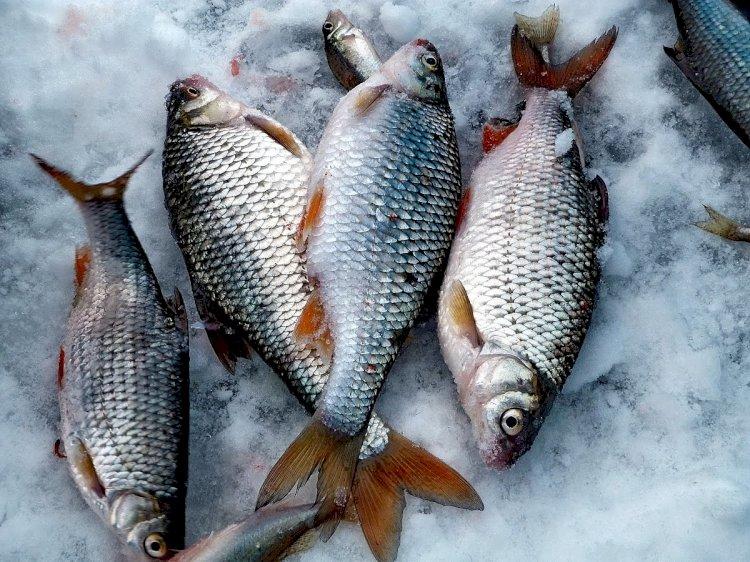 Четверых рыбаков спасли на Капшагайском водохранилище
