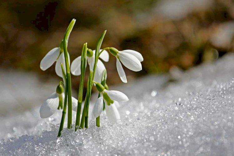 В Казахстане потеплеет: даже на севере возможен переход снега в дождь
