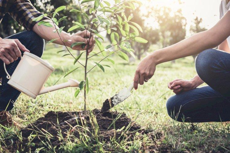 Более 300 тысяч деревьев планируют посадить в 2021 году в Алматы