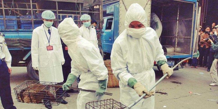 Эксперты ВОЗ не обнаружили на уханьском рынке источника COVID-19