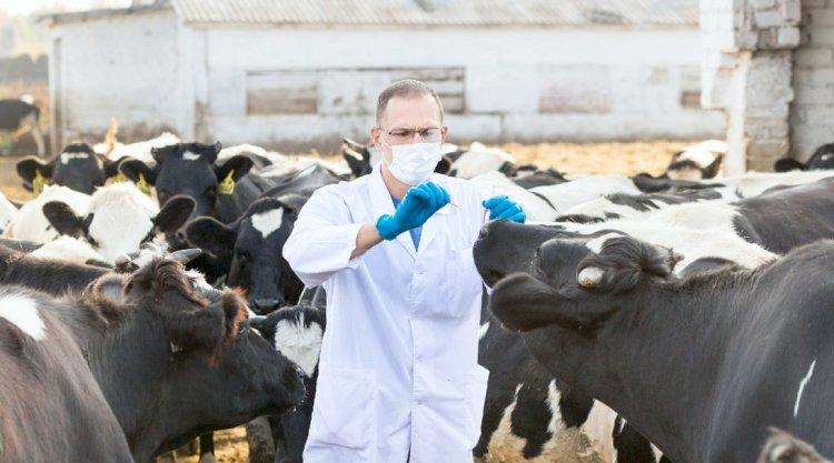 Вакцинация птиц и животных стартовала в Казахстане