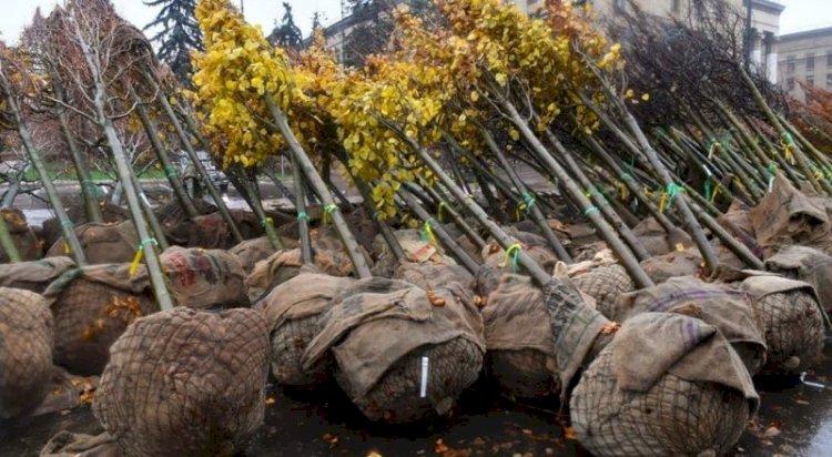 350 тысяч деревьев высадят в Алматы