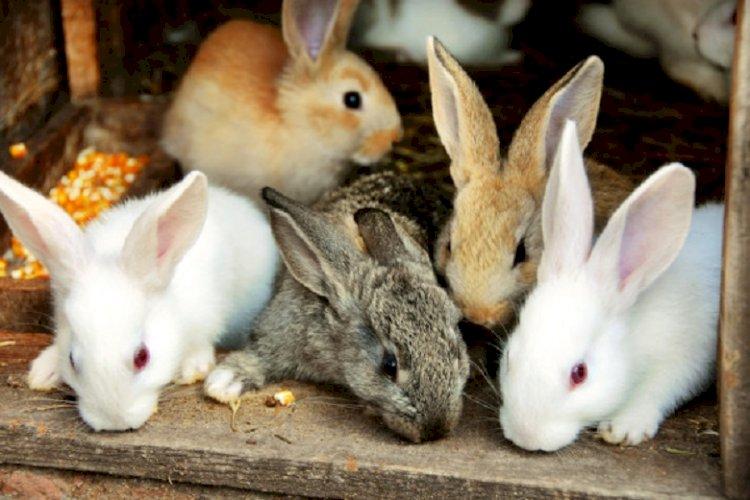 ВОЗ: Кролики и барсуки с Уханьского рынка могли быть причастны к распространению COVID-19