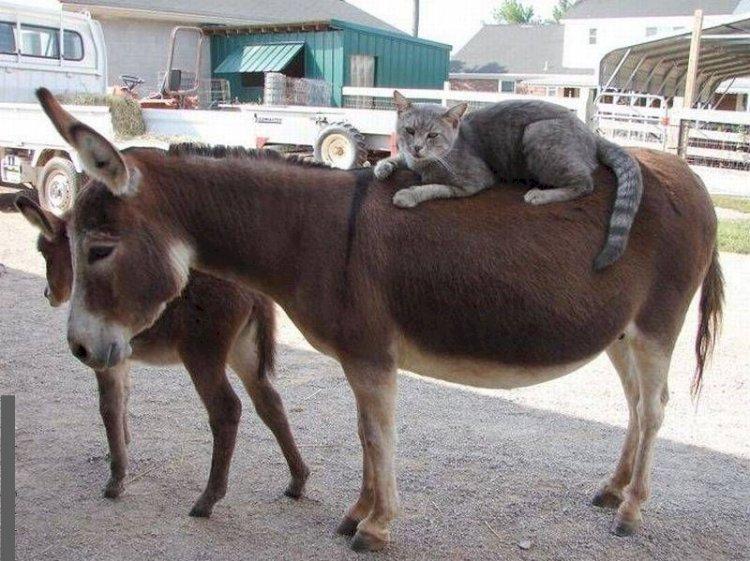 По улицам Алматы свободно разгуливали ослы