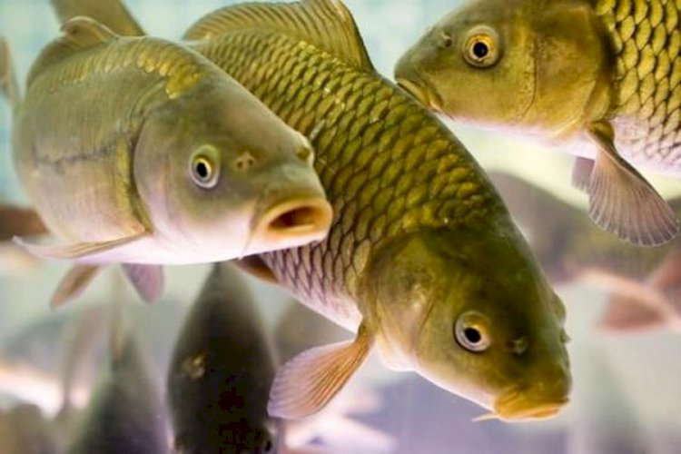Выпуск свежей и мороженной рыбы в Казахстане вырос в разы