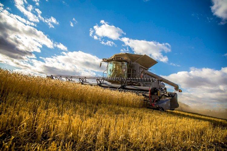 Урожайность зерновых и бобовых культур выросла в Казахстане