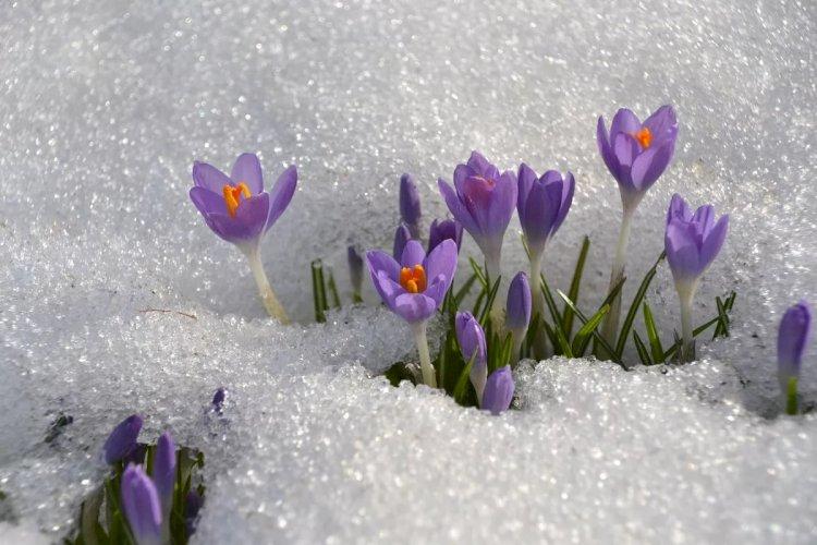 Какая погода ожидает казахстанцев в первый день весны