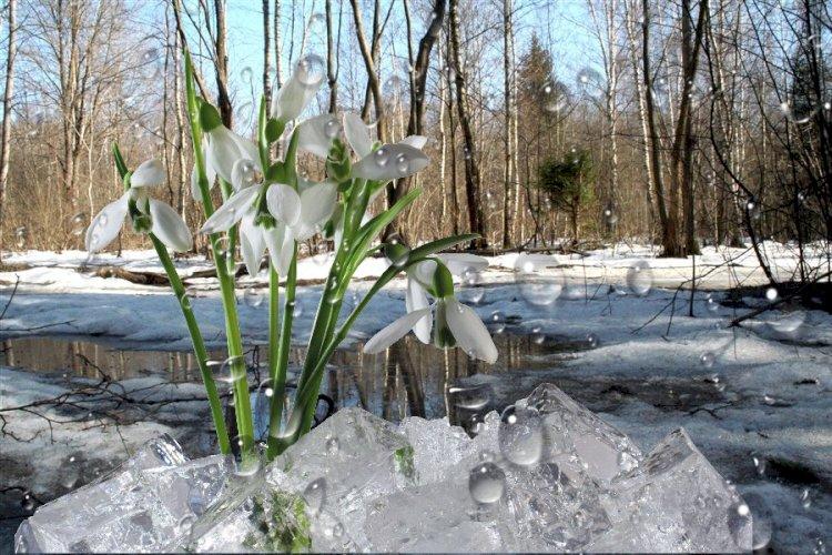 Весна придет по расписанию: какая погода ждет казахстанцев в марте