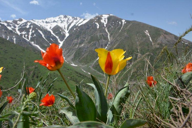 Защитить растительный мир специальным законом хотят в Казахстане