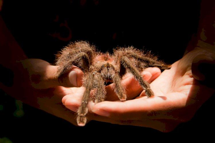 Алматинцев научат не бояться пауков