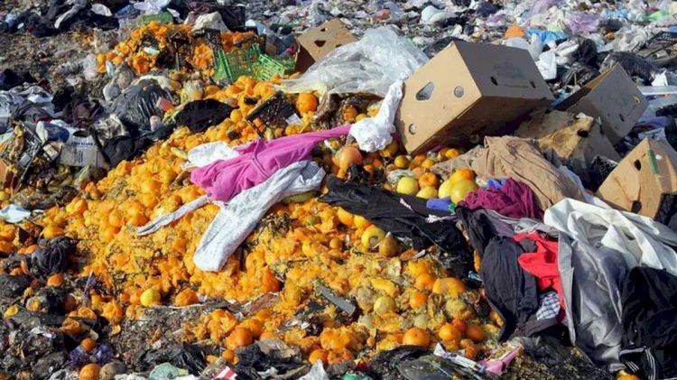 Более 900 млн тонн еды ежегодно выбрасывается в мире