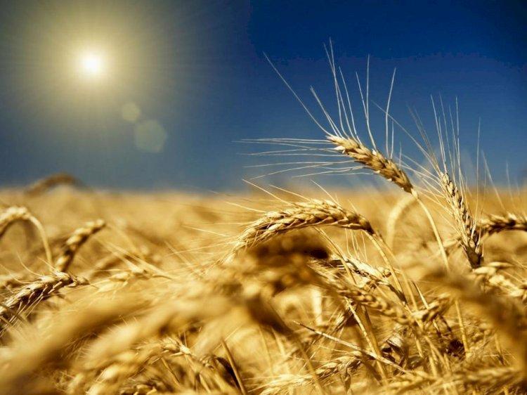 Казахстанские агропромышленники  покоряют китайский рынок