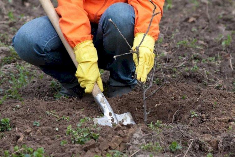 В Алматинской области высадили молодые яблони