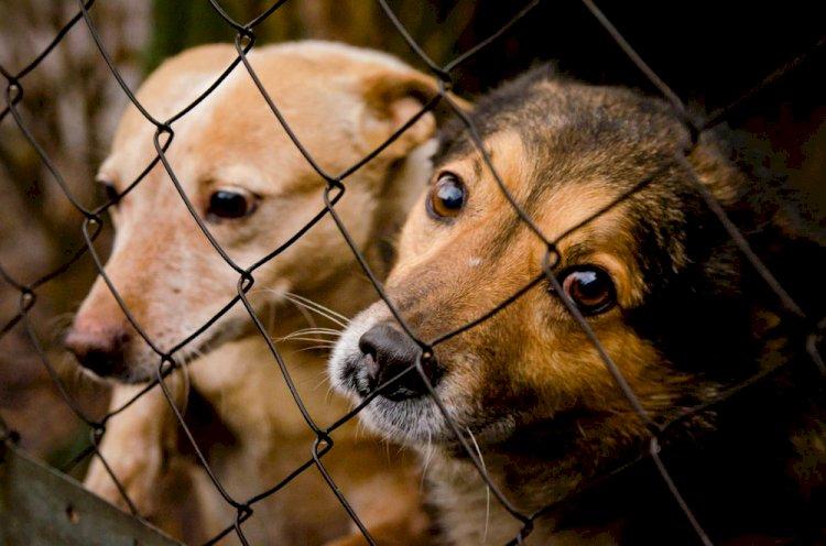 Что подразумевает законопроект  «Об ответственном обращении с животными»