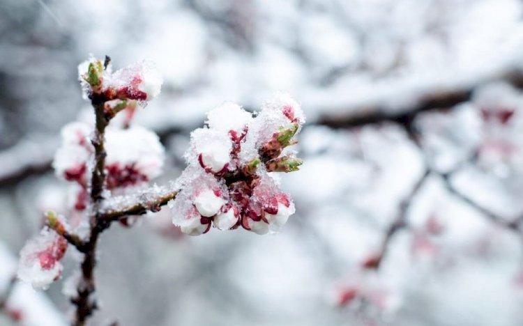 Заморозки ожидаются на юге Казахстана