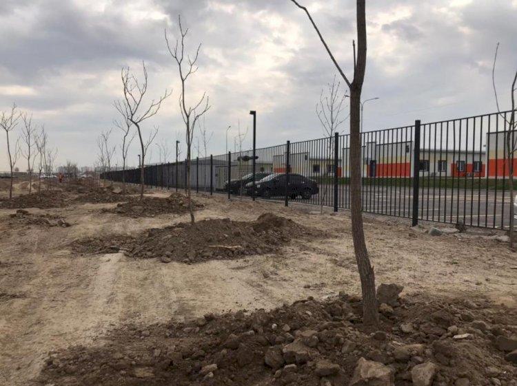 В Алматы высадили 500 деревьев