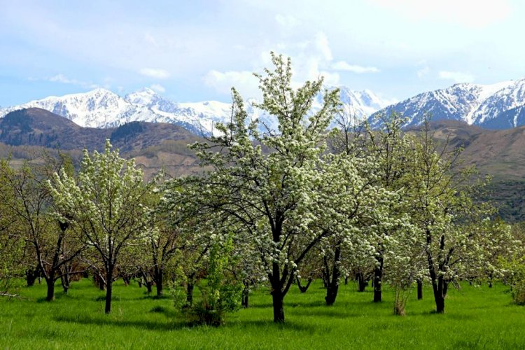 Помологическому саду Казахстана хотят присвоить статус национального достояния