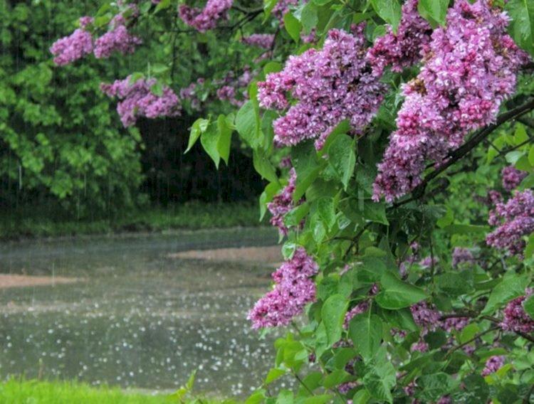 Дожди и понижение температуры ожидаются в нескольких регионах страны