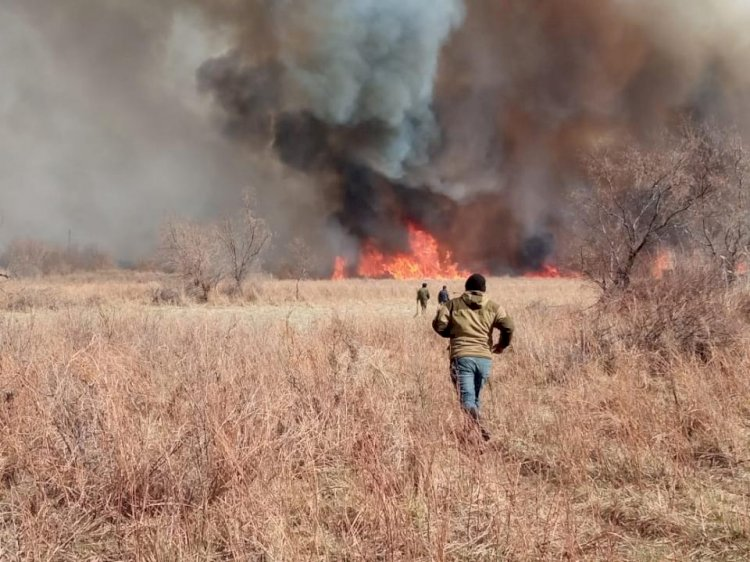 Более 500 лесных и степных пожаров зарегистрировано в Казахстане в этом году