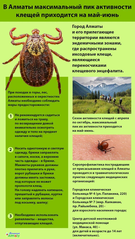 В Алматы максимальный пик активности клещей приходится на май-июнь