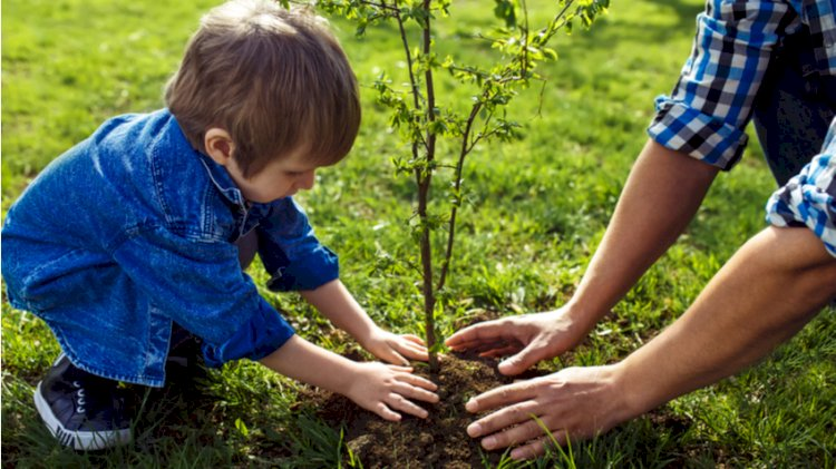 Об увеличении зеленых насаждений рассказали в акимате Алматы