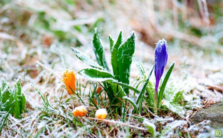 Заморозки ожидаются в ряде областей Казахстана