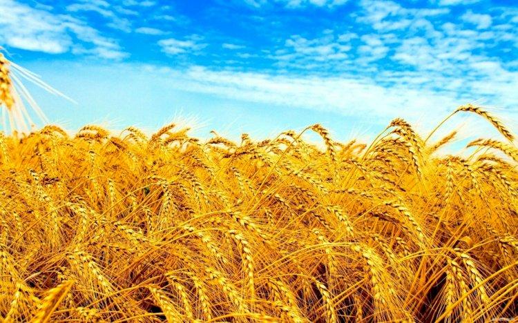 Минсельхоз РК опроверг слухи о наступлении голода в стране