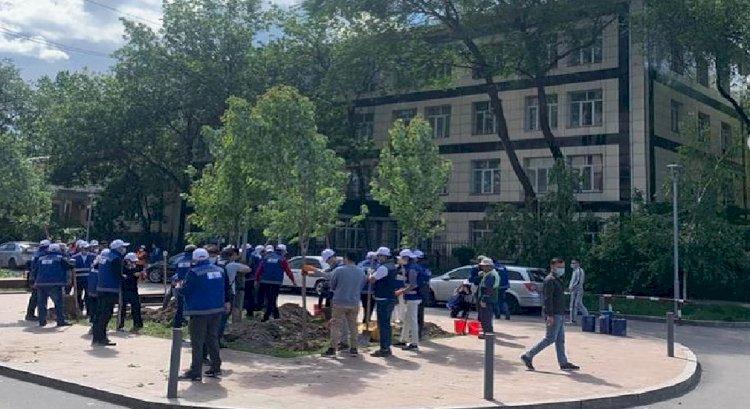 Возле здания прокуратуры Алмалинского района высадили 50 деревьев
