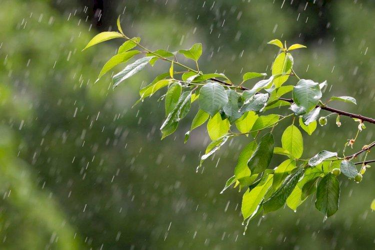 Дожди и грозы ожидают казахстанцев в предстоящие дни