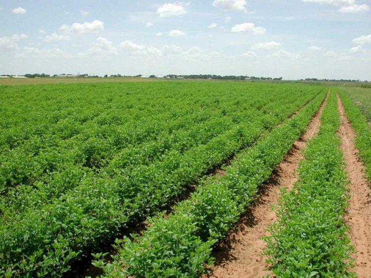 В Мажилисе одобрили поправки в Земельный кодекс