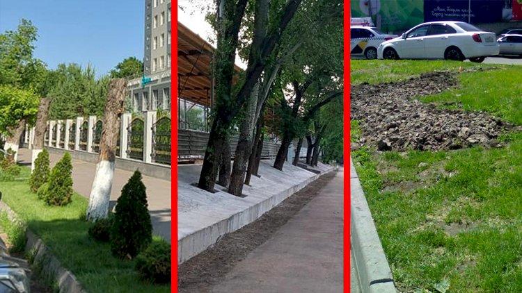 Дежурный по городу. Что-то неладное в последнее время творится в мегаполисе с зелеными насаждениями