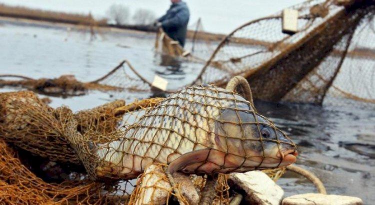 К уголовной ответственности привлекли браконьеров, выловивших 65 кг рыбы в Балхаше