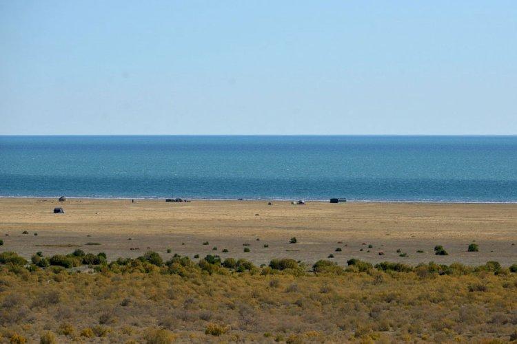 Саксаулом засадят более 1 млн гектаров дна Аральского моря